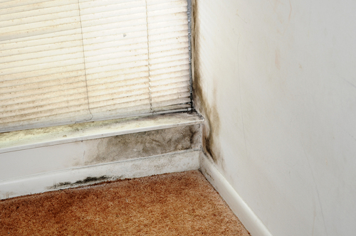 This is a picture of mould growth on a wall.