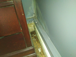 Mould and water damage